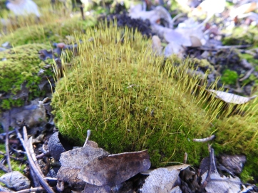 Charming Moss