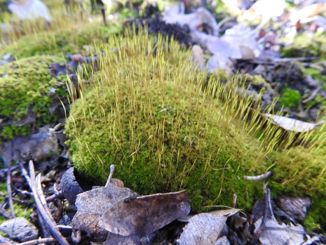 Charming Moss