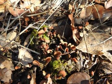 Cryptobiotic Mats Fungi/Moss